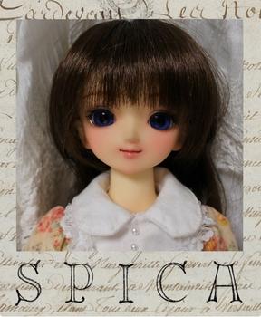 spicapuro06 (527x640).jpg