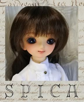 spicapuro07 (527x640).jpg
